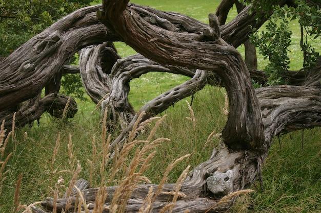 Красивый снимок старого дерева на траве поля