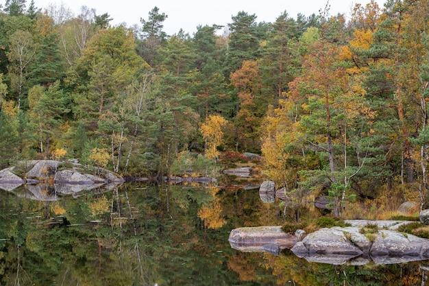 秋の木の美しいショットとその水面への反射