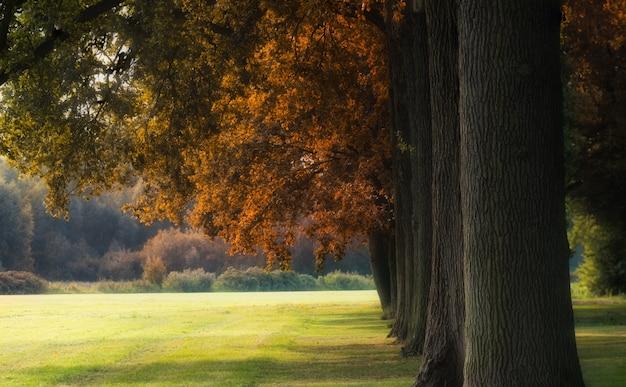 낮에 잔디 필드에 큰 갈색 잎이 많은 나무의 아름다운 샷