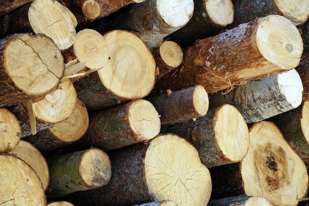 Красивый снимок связки срубленных деревянных бревен