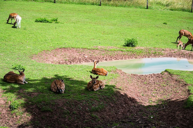 Красивый снимок оленей на зеленой траве в зоопарке в солнечный день