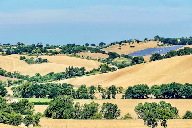 Красивый снимок холмов сухой травы с деревьями под голубым небом в умбрии, италия