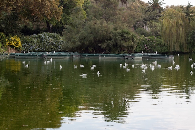 Красивый снимок уток, плавающих на воде пруда