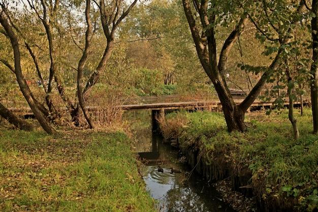 Красивая съемка уток плавая в воде в парке в москве