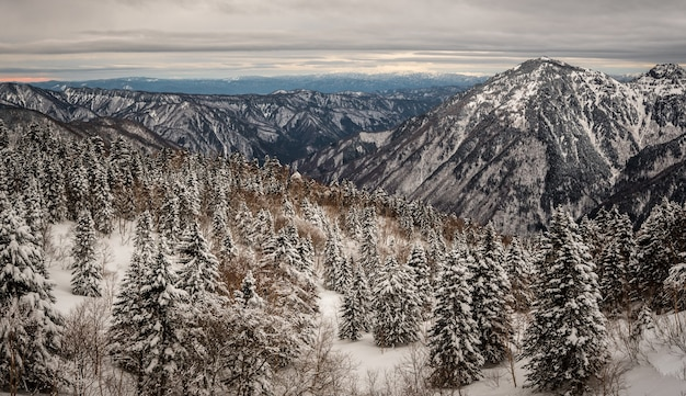 겨울에 눈으로 덮여 숲이 우거진 산의 아름다운 샷