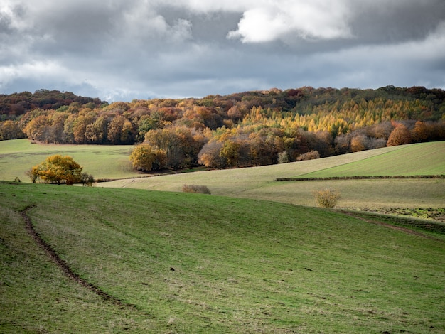 Красивый снимок травянистых холмов с лесом на расстоянии под облачным небом