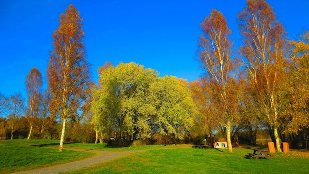 澄んだ青い空の下で背の高い松の木と緑のフィールドの美しいショット