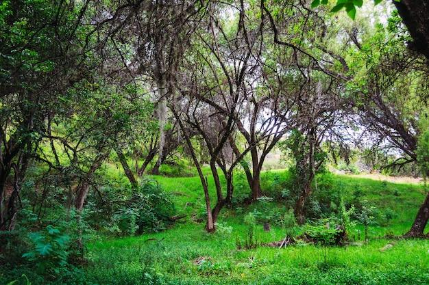 森の中の緑の草や木の美しいショット