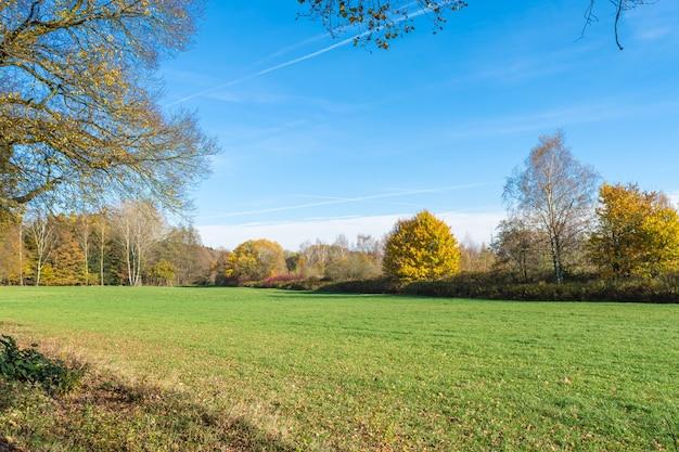 Красивый снимок зеленого пейзажа под ясным голубым небом