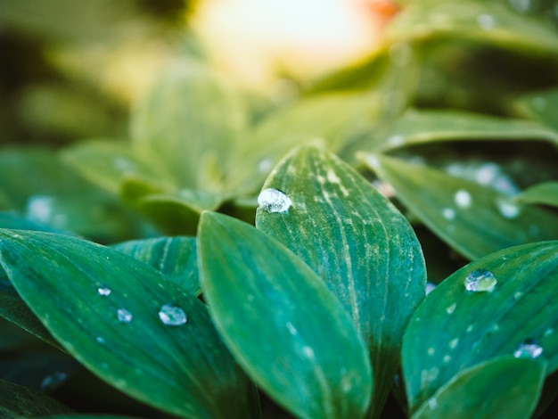 Красивый снимок зеленых растений с каплями воды на листьях в парке в солнечный день