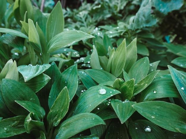 Красивый снимок зеленых растений с каплями воды на листьях в парке