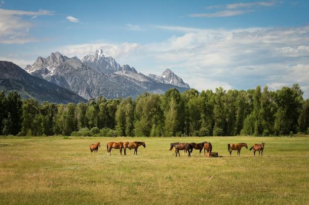 Красивая съемка лошадей в травянистом поле с деревьями и горами на расстоянии в дневное время