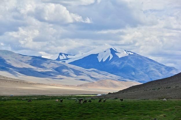 산과 녹색 계곡의 아름다운 샷