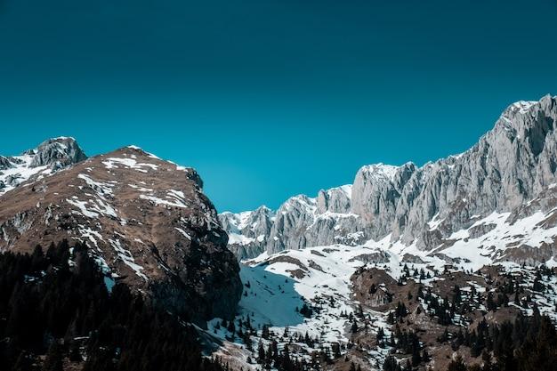 Красивый снимок соснового леса в горах, покрытых снегом