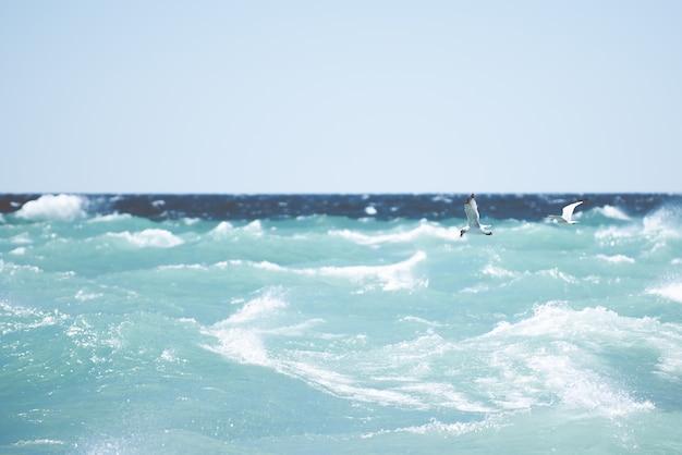 큰 파도와 바다 위로 비행하는 갈매기의 아름 다운 샷