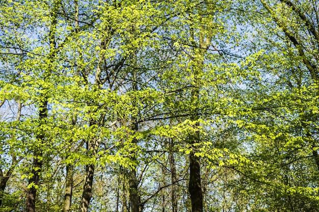 森の中の背の高い緑の木々の美しいショット