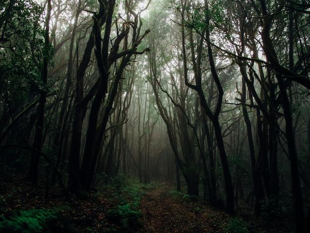 식물에 둘러싸인 안개 숲에서 키 큰 나무의 아름다운 샷