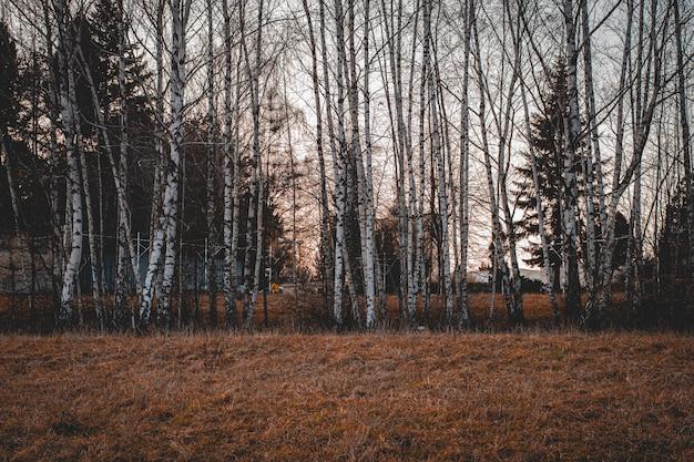 憂鬱な日に森の裸の枝を持つ背の高い木の美しいショット