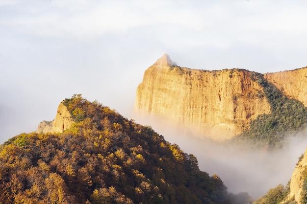 霧の日に木々に覆われた崖の美しいショット