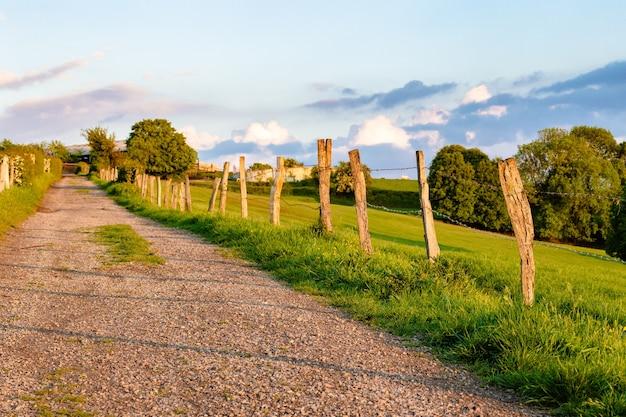 Красивый снимок дороги через поле в окружении деревьев