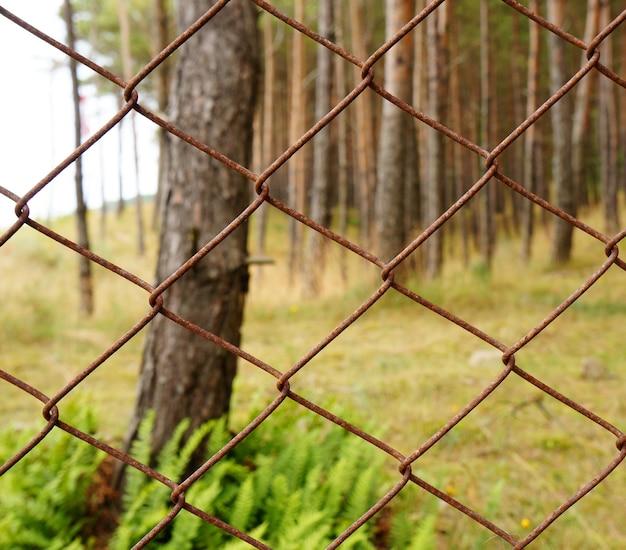 Красивый снимок деревьев в лесу за металлическим забором