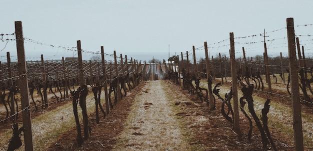 Красивый снимок виноградников, защищенных деревянными и металлическими заборами.