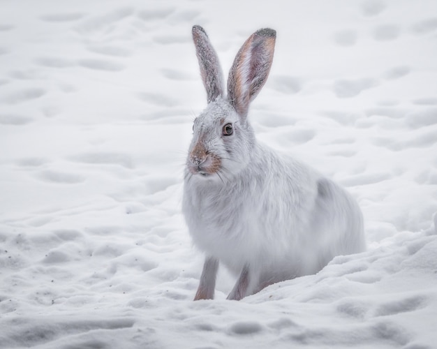 雪に覆われた森の中の白いウサギの美しいショット