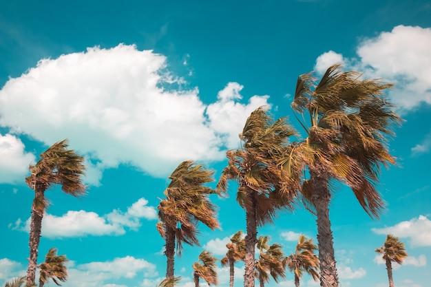 Красивый снимок ветвей деревьев, склонившихся под действием ветра