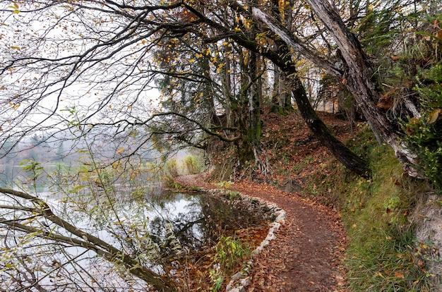 크로아티아의 플리트 비체 호수 국립 공원에있는 나무와 호수의 아름다운 샷