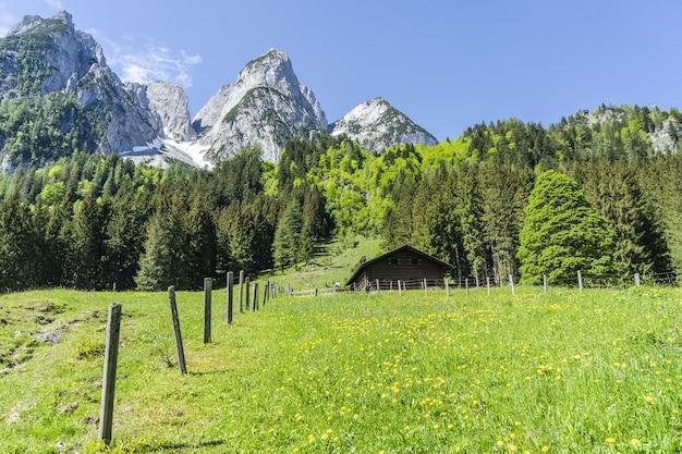 田舎の澄んだ空の下、木々と雪に覆われた山々の美しいショット