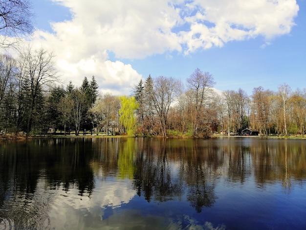 Красивый снимок деревьев и их отражение на пруду в еленя-гуре, польша. Бесплатные Фотографии
