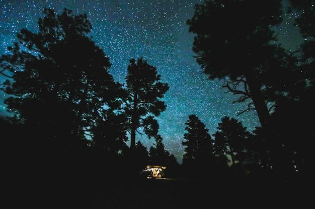 별이 빛나는 밤 하늘 아래 나무의 아름 다운 샷