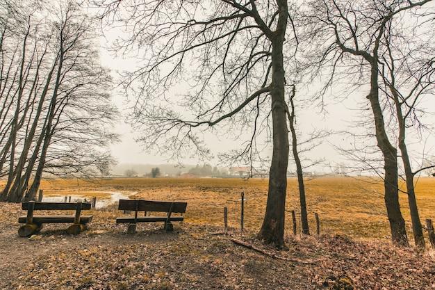 森林公園の木製ベンチの美しいショット