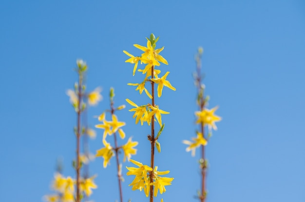 노란색 야생화의 아름 다운 샷
