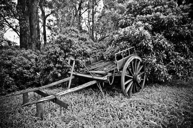 Beautiful shot of an old broken horse cart near trees in black and white