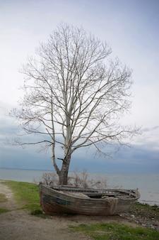 Bellissimo scatto di una vecchia barca di legno sotto l'albero spoglio vicino all'oceano