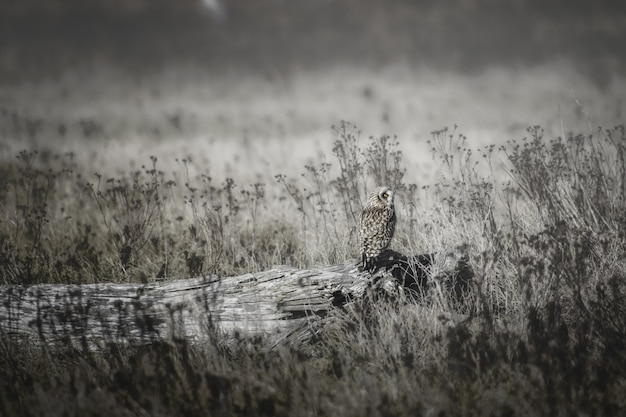Beautiful shot of an owl on a tree log in the field of dry grass during daytime