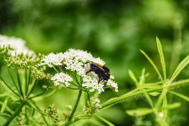 Beautiful shot of a plant with tiny white flowers and an insect on it