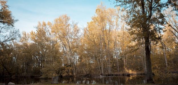 Bello colpo di uno stagno vicino agli alberi coperti di foglie gialli alti con un cielo blu nei precedenti