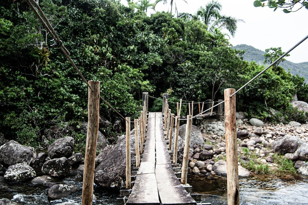 Beautiful shot of ponta negra over a river in the forest in paraty, brazil