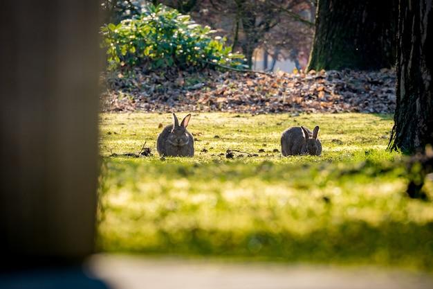 Bellissimo scatto dei conigli nei campi con un tronco d'albero in primo piano