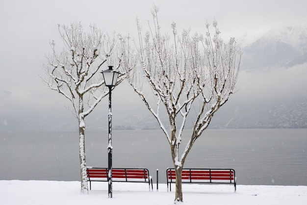 Beautiful shot of the red benches near the shore in winter under the trees