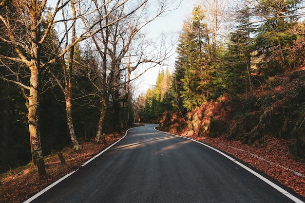 Beautiful shot of a road through the green forest