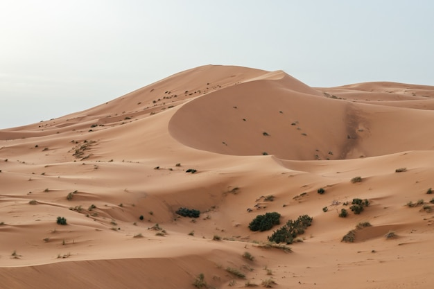 Beautiful shot of sand dunes under clear sky