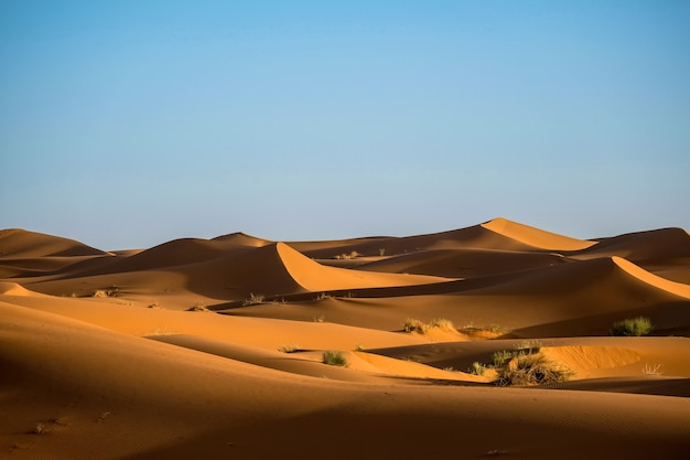 Beautiful shot of sand dunes with bushes and a clear sky