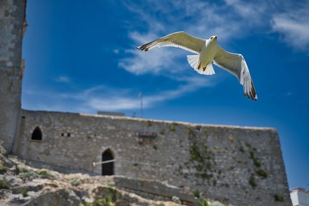 Bellissimo scatto di un gabbiano che vola da un'architettura antica