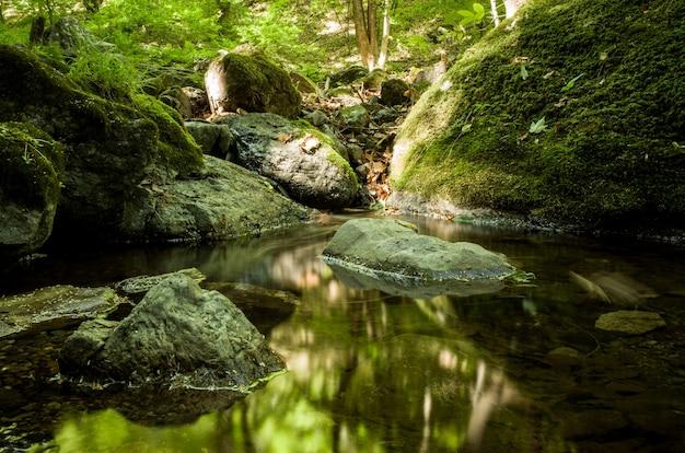 Bella ripresa di un piccolo fiume nella foresta con rocce ricoperte di muschio