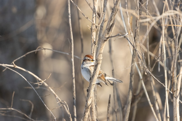 Beautiful shot of a sparrow bird resting on the branch with a blurred