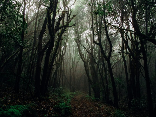Beautiful shot of tall trees in a forest in a fog surrounded by plants