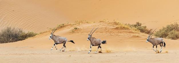 Bellissimo scatto di tre orici che corrono su un deserto del namib